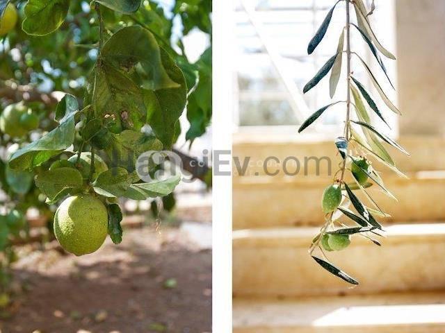 Ozanköy'de satılık bahçeli şömineli villa, 300 m² - TEXT_photo 5